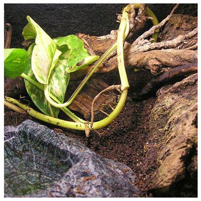 Obrázek Zemina k pohádkové zahradě